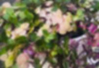 IMG-0113.jpg