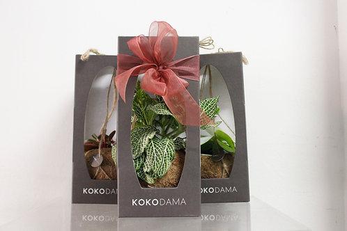 Kokodama Gift Box