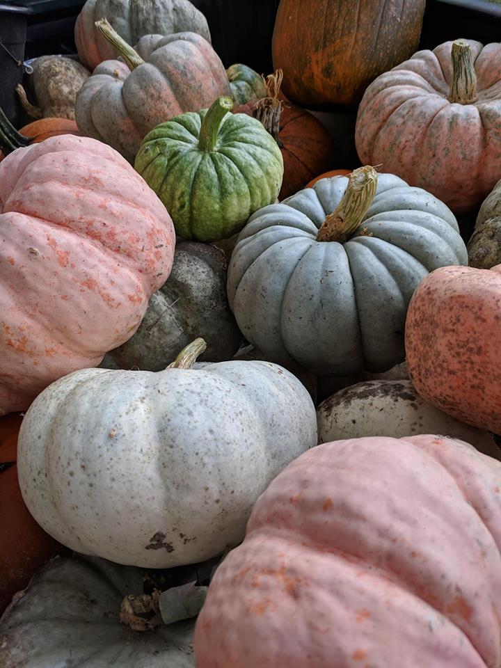 latest harvest