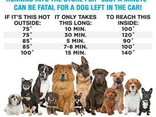 Animals In Hot Cars