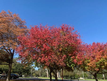 A day in Adelaide and beautiful Adelaide hills - During Autumn