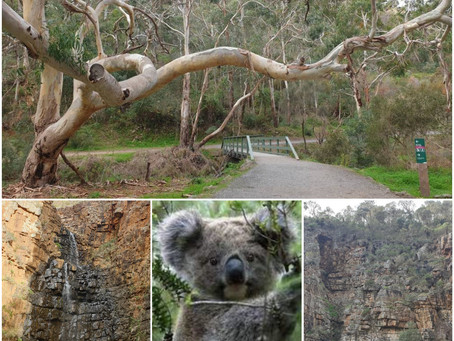 Want to see Koala's and waterfalls within 14kms from North Adelaide?
