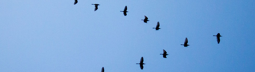 birds_edited.jpg