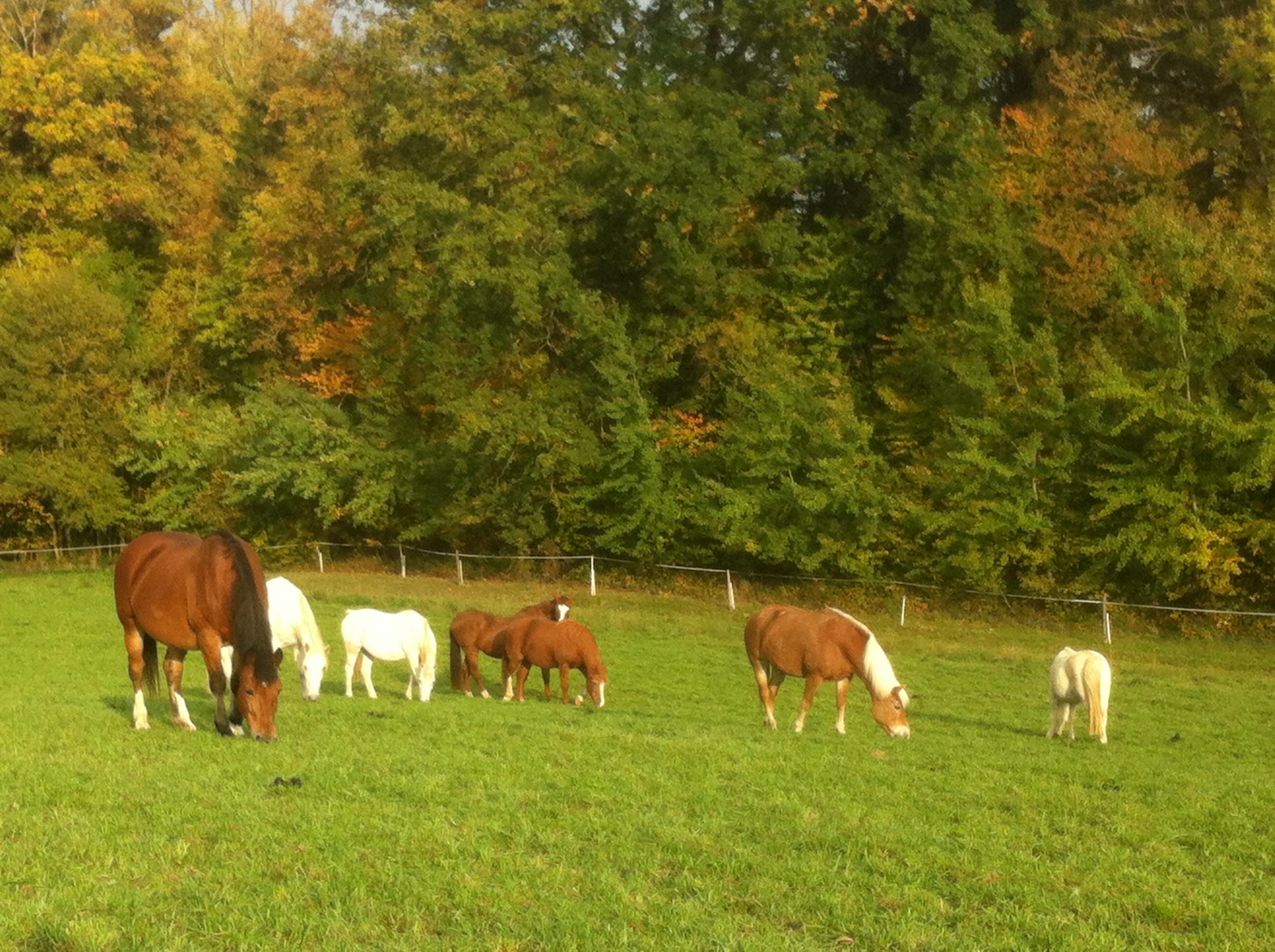 Les chevaux retraités