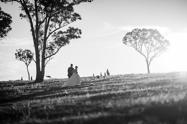 Elopement wedding photo of bride and groom walking through bush landscape including kangaroo silhouette