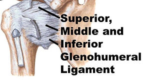 Ortopedico lussazione spalla