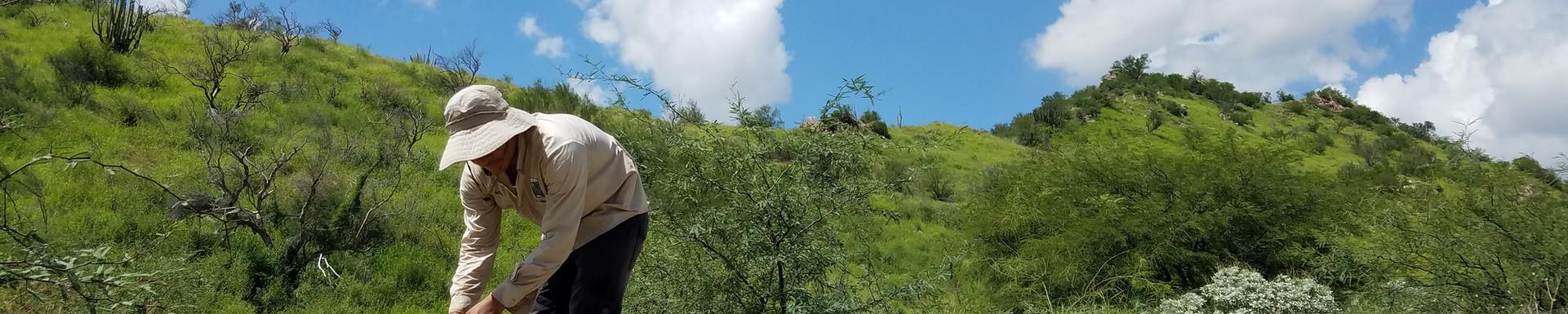 Colectivo Sonora Silvestre
