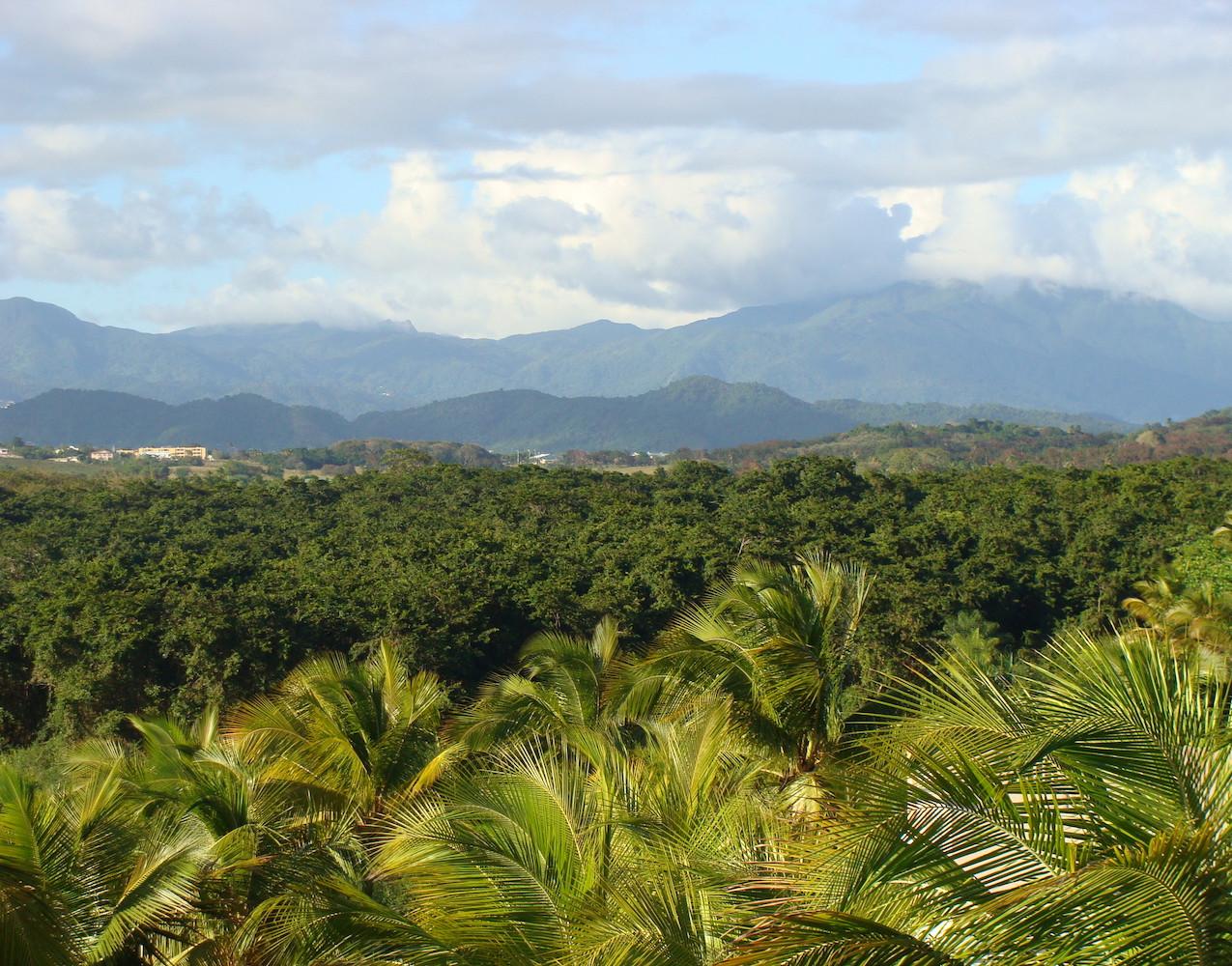 Bosque de Pterocarpus 6