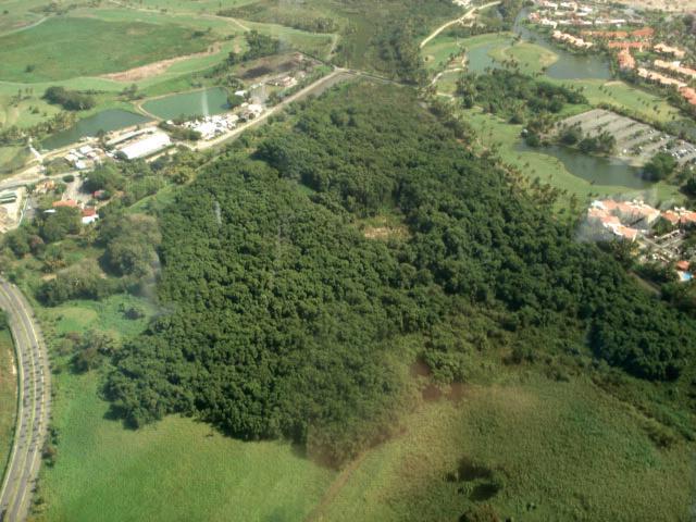 Bosque de Pterocarpus 7