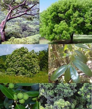 Cuidar el bosque es una cuestión de renovación y esperanza