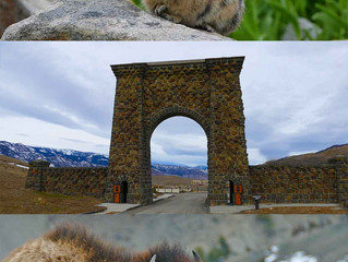 Travelling to Yellowstone National Park?