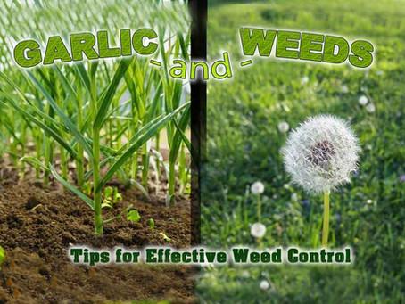 Those Damn Weeds!