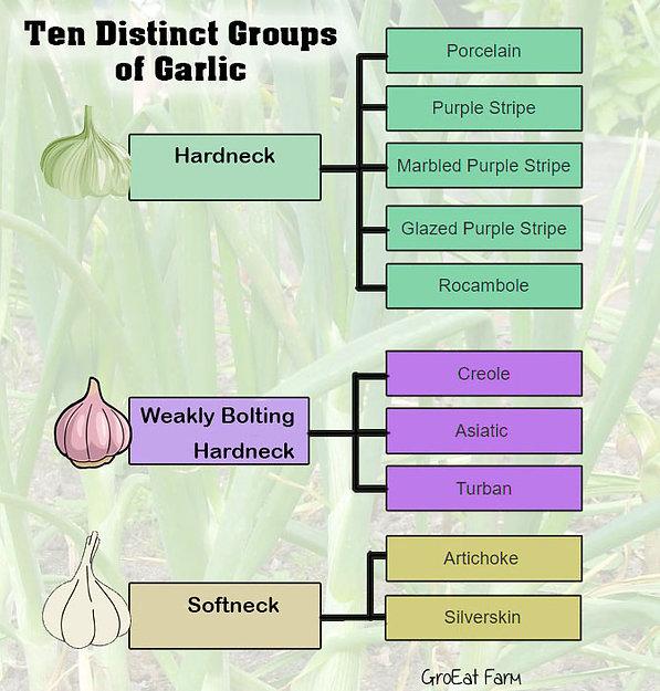 10 garlic varieties.jpg
