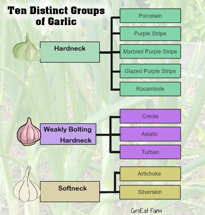 garlic for planting, garlic bulbs for planting, elephant garlic for sale, nootka rose garlic, organic garlic bulbs, fresh organic garlic, silverskin garlic, organic garlic for planting, artichoke garlic, garlic plant for sale, garlic cloves for planting,romanian red garlic,spring planted garlic,chesnok red garlic,heirloom garlic bulbs,metechi garlic,khabar,buy garlic online,garlic mesh bag,asparagus crowns for sale organic,carpathian garlic,garlic for sale online,garlic to plant,persian star garlic,how many garlic bulbs in a pound,persianstar,where to buy garlic,wholesale garlic,shallots bulbs,garlic spacing,ajo rojo garlic,inchelium red,creole red garlic,organic garlic cloves,where to buy organic garlic,creole garlic for sale,thermadrone garlic,organic shallots,garlic spanish roja,elephant garlic,french grey shallot,music garlic for sale,how many garlic cloves in a pound,how many cloves of garlic in a pound,siberian garlic,plant garlic spacing,portuguese garlic,organic planting garlic,japanese garlic plant,spanish roja garlic for sale,garlic bulbs per pound,garlic suppliers,buying garlic in bulk,rose de lautrec garlic,shallot starts,polish white garlic,oregon blue garlic,garlic varieties for sale,siberian garlic for sale,aglio rosso garlic,sicilian garlic,chesnok red garlic for sale,groeat farm coupon code,penasco blue garlic,red sulmona garlic for sale,where to buy organic asparagus,burgundy garlic,thai garlic bulbs,how much garlic to plant,groeat garlic farm coupon code,organic garlic bulbs for planting,dutch red shallots,asiatic garlic,hardneck garlic bulbs for sale,garlic bulbs for sale near me,metechi,fresh garlic for sale,garlic sets for planting,buy garlic for growing,kettle river giant garlic,garlic prices per pound,where to buy shallots,growing garlic how to,bogatyr garlic,how many heads of garlic in a pound,asian tempest garlic,grow great garlic,garlic bulbs for planting for sale,organic elephant garlic,montana zemo garlic,buy garlic bulbs for planting,wh