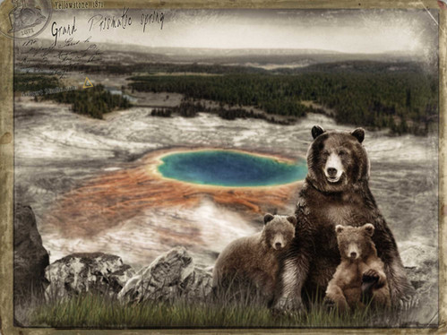 Bears at Prismatic Springs. Yellowstone 1871