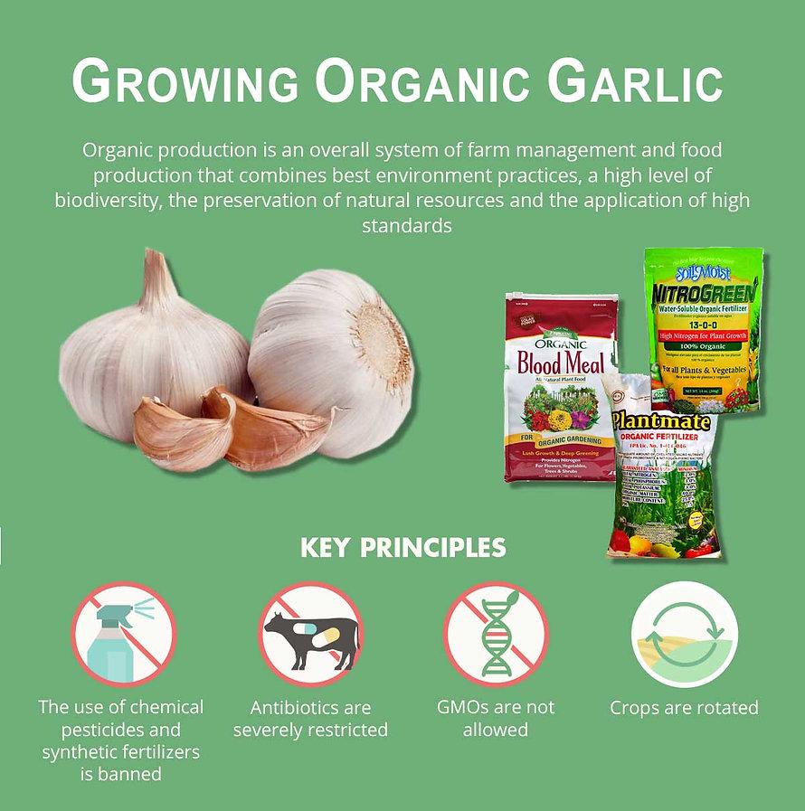 growing-organic-garlic-poster.jpg