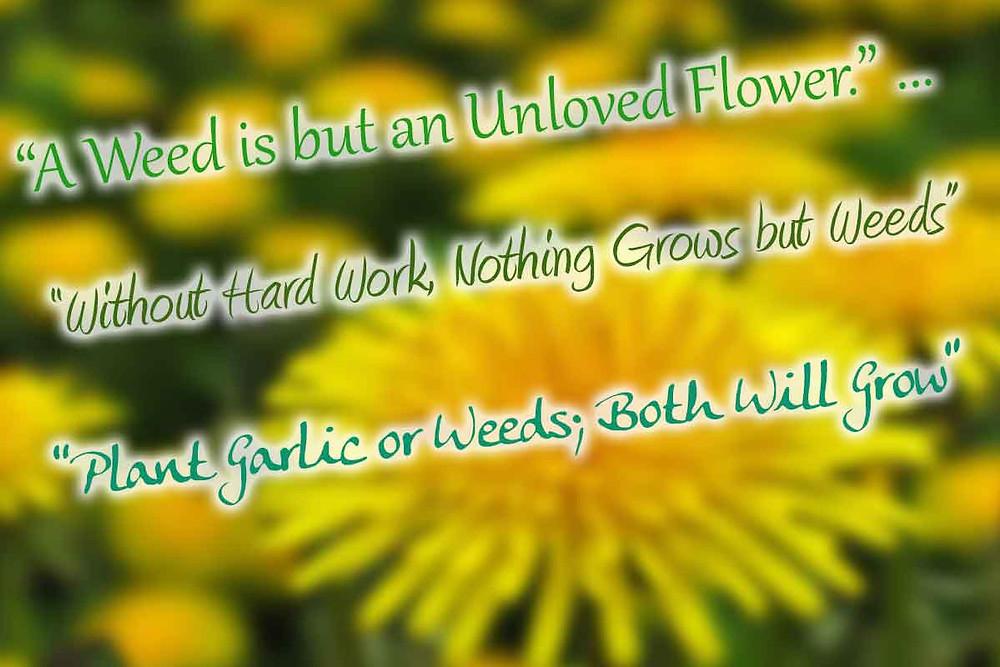 Weed Quotes, Garlic, Seed Garlic