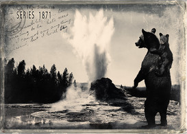 Bear Back View. Yellowstone 1871