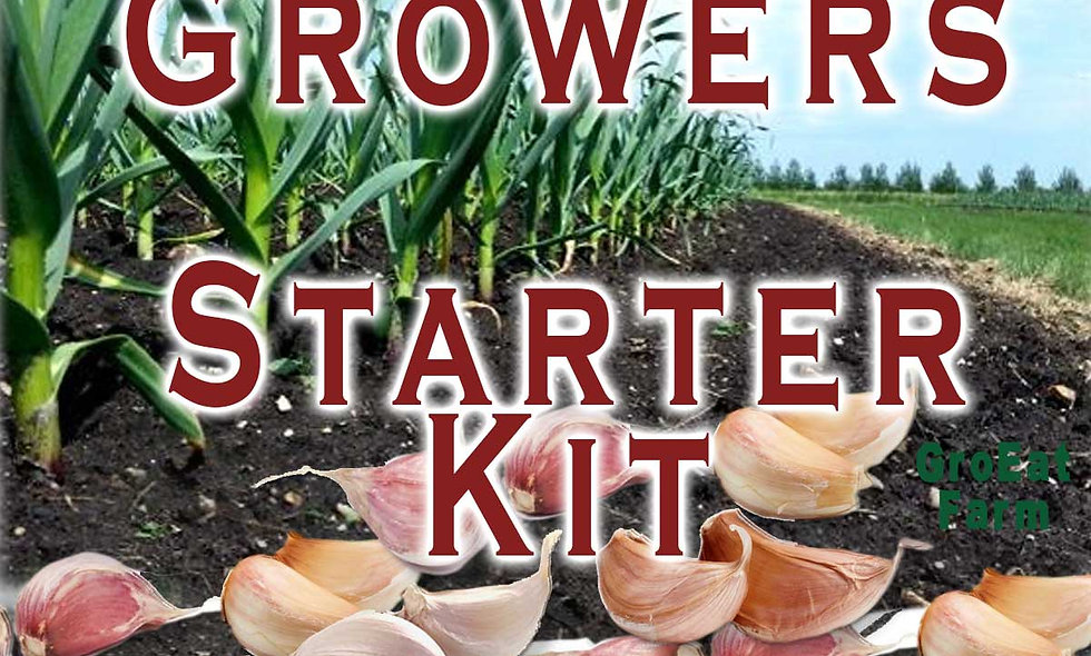 Garlic Grower Starter Kit.  (Cloves and Instructions)