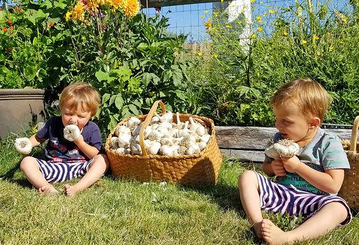 row-bite-garlic-seneca-holding-and-looki