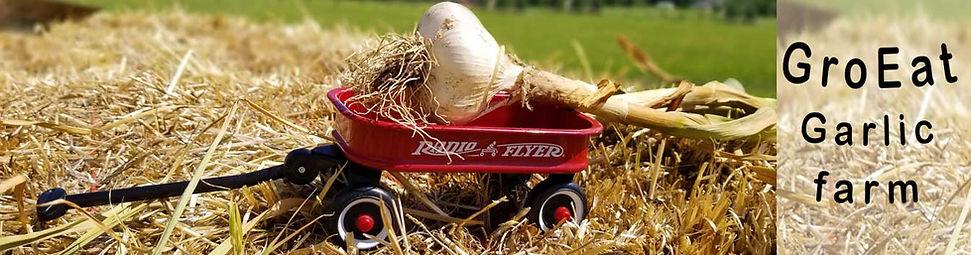 biochar, bio char, gaMontana Garlic Zemo, Mowing, Music, Bulk, Strains, Porcelain, Seed Savers, Johnny Seed, Burpee, Harris, BJ, Hood Rive, Crater Lake, Natural, how to, plant, grow, bake, growing garlic,order garlic online,seed garlic,garlic seed,buy,farm, garlic farm