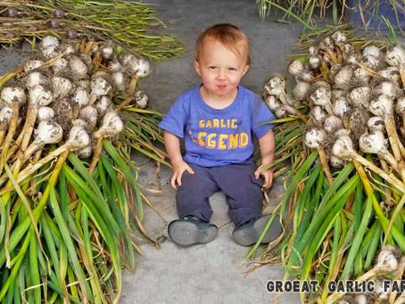 Buying Garlic Seed?
