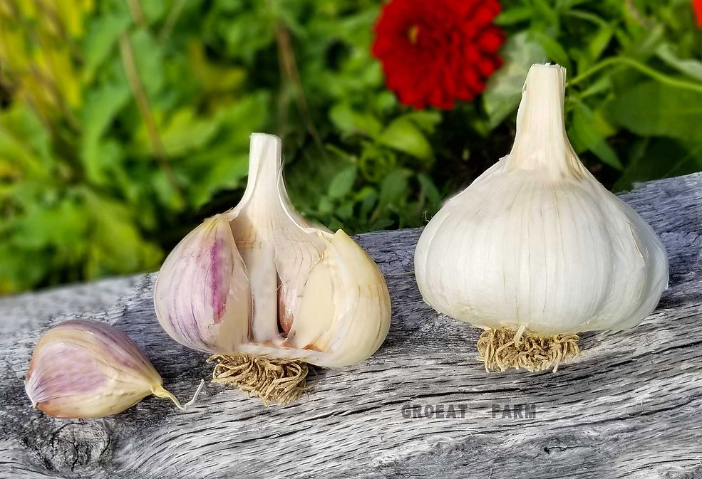 japanese garlic, buy black garlic, organic garlic bulbs, sicilian honey garlic, garlic hot sauce,aioli, garlic bread, buy garlic, order garlic, black garlic, garlic bread recipe, minced garlic, garlic aioli, garlic butte, sauce, homemade garlic,