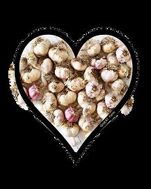 gilroy garlic festival black garlic garlic mustard Anna Louise clove of garlic Swimsuit, julia rose, africa, hardneck, casanova, stepmother, punished, belly, enjoy, learn about, busty, plays, garlic, seed, lezdom, how deep, plant garlic, softneck, soil, PewDiePie, WWE, Zee Music, Organic, Hardneck Garlic, Cum, Bieber, Garlic, Nastya, Like, Crafts, 5 Minute, Bangtan, TV, Garlic, SAV, TV, Garlic, Ed Sheeran, Garlic, Marshmello, Garlic, MrBeast, Garlic  Roasted Garlic Leggings garlic shrimp Playboy honey garlic Sexy garlic bread Fiona Simpson how to roast garlic Britney Amber garlic mashed potatoes Victoria Xavier garlic aioli Try On garlic minced garlic