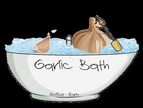 plant for zone 5,garlic planting zone 7,garlic planting zone 6,garlic planting zones,garlic planting zone 9,garlic farming zimbabwe,garlic for winter planting,garlic planting watering,garlic planting when,how to plant garlic wikihow,garlic plant when to pick,garlic plant wild,garlic plant with flowers,garlic bulbs for winter planting,garlic companion planting with tomatoes,garlic harvest when,planting depth for garlic,planting distance for garlic,how do you prepare soil for planting garlic,how do i prepare garlic cloves for planting,spacing and depth for planting garlic,directions for planting garlic,how to dry garlic for planting,how do you prepare garlic for planting,how do you break apart garlic for planting,garlic bulbs for planting australia,amazon garlic bulbs for planting,wood ash for planting garlic,how to prepare garlic for planting,how to store garlic for planting,hardneck garlic for planting,how to sprout garlic for planting,how to prep garlic for planting,how to save garlic
