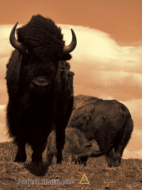 Bison Protection