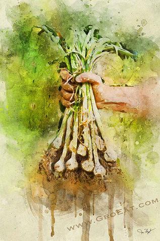 holding-garlic-harvest-watercolor.jpg