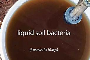 soil-bacteria.jpg