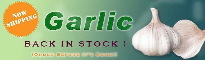 garlic-back-in-stock-now-shipping.jpg