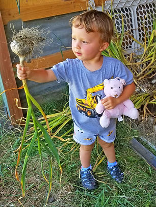 Rowan-Holding-Garlic-2020-Shed-Newslette