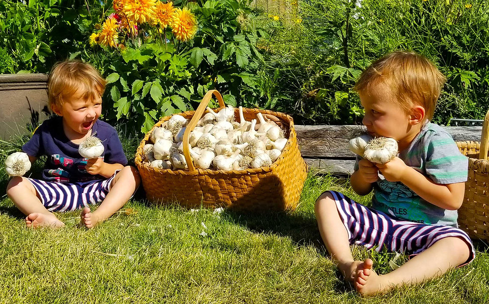 Row-Sen-Inspecting-Garlic-2.jpg