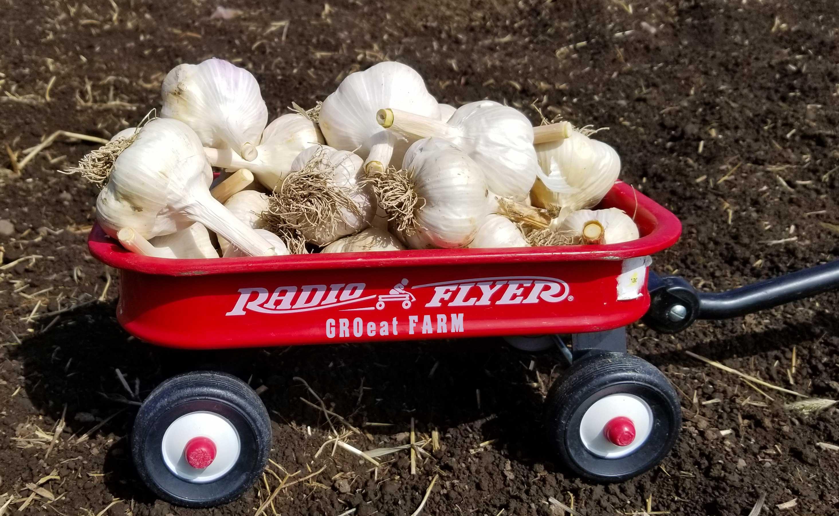 Garlic-Wagon-Radio-2020