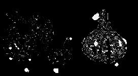 garlic seed grey duck burpee gurneys amazon filareefarm seedsavers harrisseed bozeman montana twin lakes