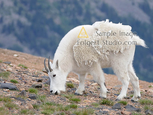 Mountain Goat Salad