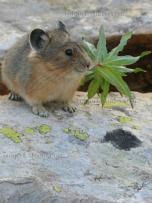 Pika Leaf Bundle