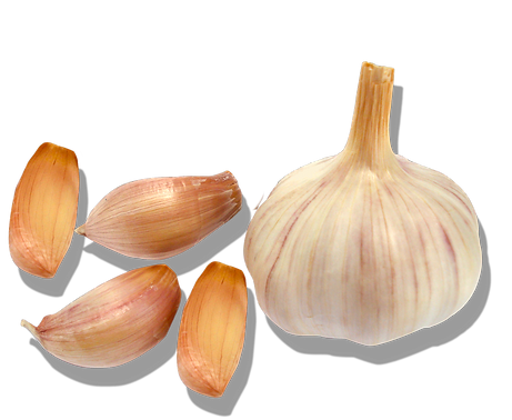 garlic head and cloves.png