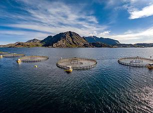 farm-salmon-fishing-in-norway-UZ6CQNT.jpg