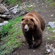 Fortress of the Bear sitka alaska