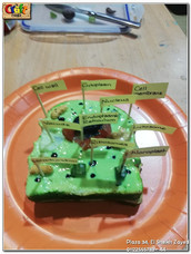 Edible animal cell (680)