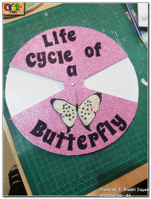 Life cycle of a butterfly (639)