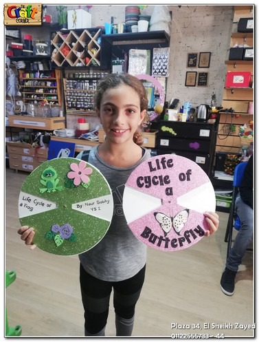 Life cycles of frog & butterfly (641)