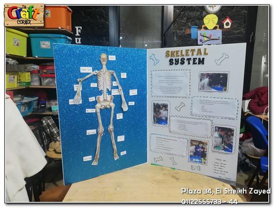 Skeletal system (695)