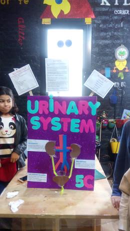 Urinary system (324)