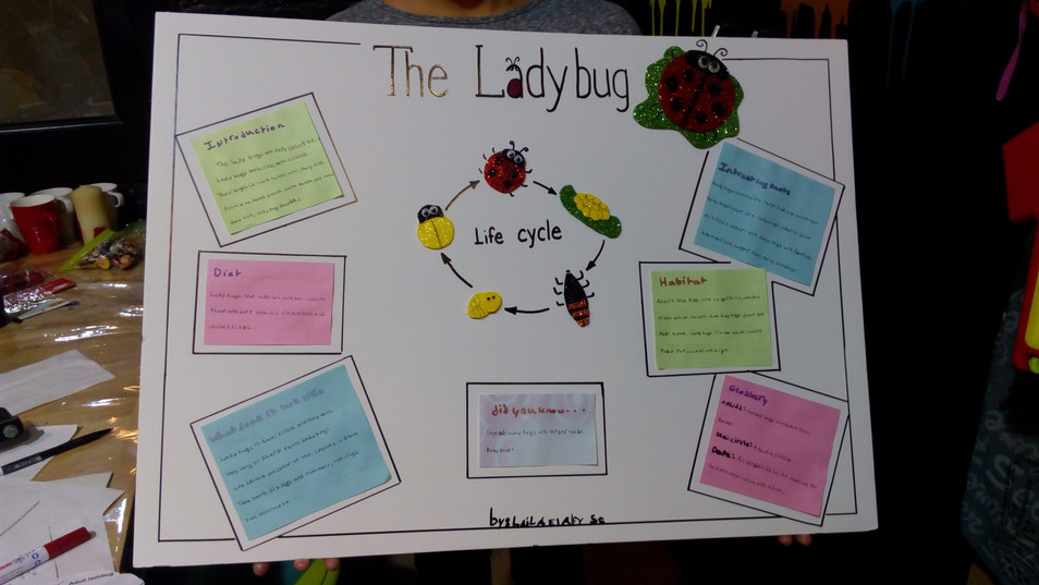 Life cycle of the ladybug (292)