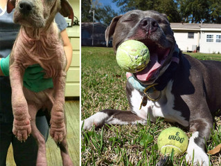10 Before/After Dog Adoption Photos to Fix Your Mid-Week Blues