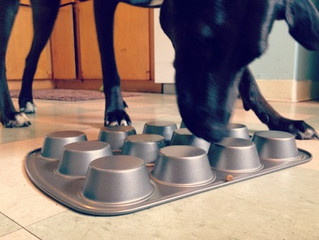 6 DIY Games to Combat Doggy Boredom